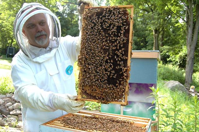 apiculture de loisir
