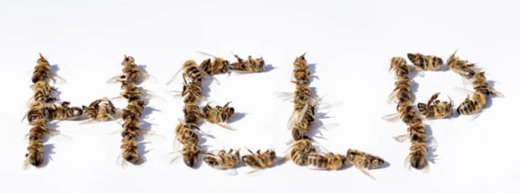 help 1024x380 - Retour temporaire des pesticides néonicotinoïdes : tout savoir en 5 points